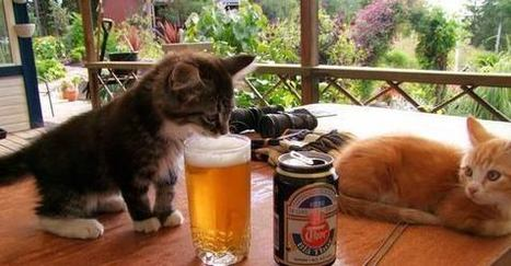 Kitten's first beer. Don't worry, you'll develop a taste for it. | My English page Bart van den Berk | Scoop.it
