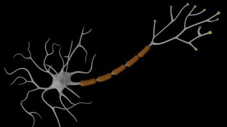 Brain cells created from human skin cells offer potential MS treatment | Longevity science | Scoop.it