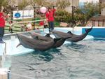 Japanese Coast Guard assists Taiji dolphin hunters | Life on Earth | Scoop.it
