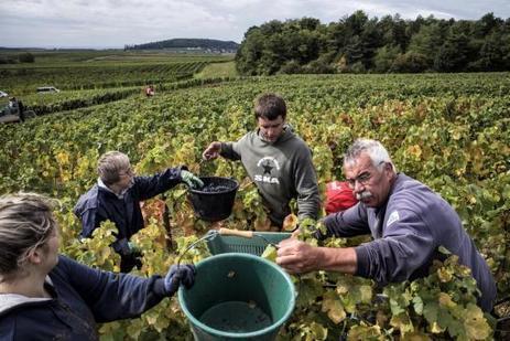 Les vins d'Henri Jayer atteignent les sommets, ses héritiers gardent les pieds sur terre | Le vin quotidien | Scoop.it