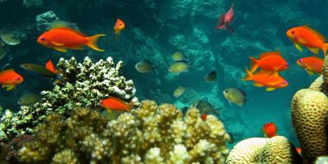 Scientists Warn Of Hot, Sour, Breathless Oceans | Sustain Our Earth | Scoop.it
