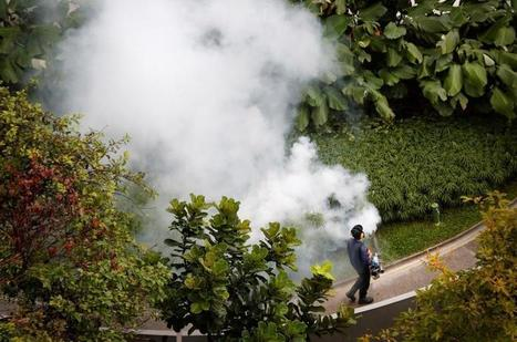 Singapore confirms 41 cases of locally-transmitted Zika virus | Virology News | Scoop.it