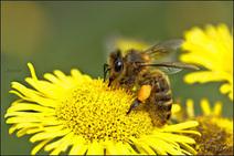 Alerte aux insecticides néonicotinoides dans nos aliments ! | Toxique, soyons vigilant ! | Scoop.it
