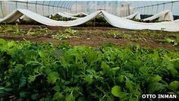 BBC Mundo - Noticias - La ciudad de los autos pone sus esperanzas en la agricultura urbana | Cultivos Hidropónicos | Scoop.it