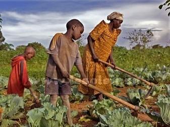 Alliance globale pour la résilience au Sahel et en Afrique de l'Ouest : Objectif, éradiquer la faim d'ici à 20 ans | Le Sahel, un espace instable | Scoop.it