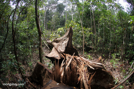 Australia outlaws illegally-logged wood from abroad   Ecological sustainable development of environment - Logging   Scoop.it