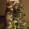 Cat Caught In The Christmas Tree