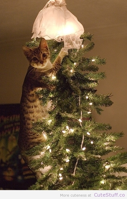 Cat Caught In The Christmas Tree | CuteStuff.co - Cute Animals, Cute Pictures, Cute Videos and MORE! | Cat Caught In The Christmas Tree | Scoop.it