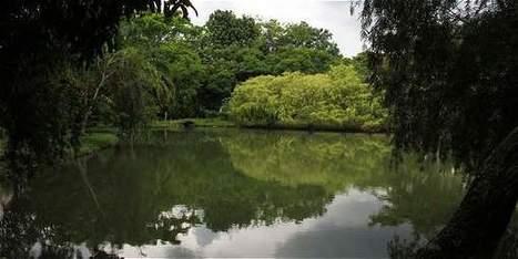 Solo el 7 % de los humedales del país están protegidos - Ciencia - El Tiempo | Agua | Scoop.it