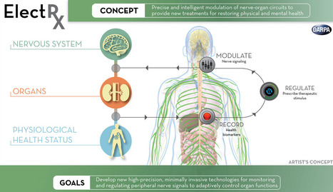 DARPA explores neuromodulation of organ functions to help the human body heal itself   KurzweilAI   Content in Context   Scoop.it
