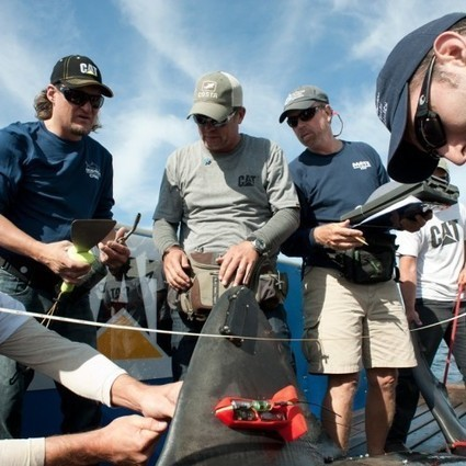 Betsy the Great White Shark Tracked off Southwest Florida | News & Press | Shark conservation | Scoop.it