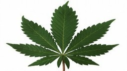 Is Marijuana Booming Among Boomers? - Forbes | It's a boomers world! | Scoop.it