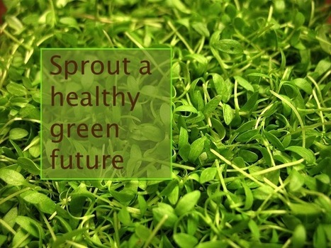 Sprout a green, healthy future...on your countertop   Annie Haven   Haven Brand   Scoop.it