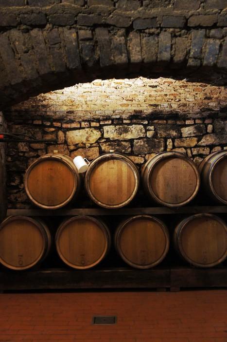 L'énergie de chaque terroir révélée par la dégustation géosensorielle | Le Vin et + encore | Scoop.it