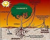 Non-Uniform Climate Warming Affects Carbon Cycle And Ecosystems | Sustain Our Earth | Scoop.it