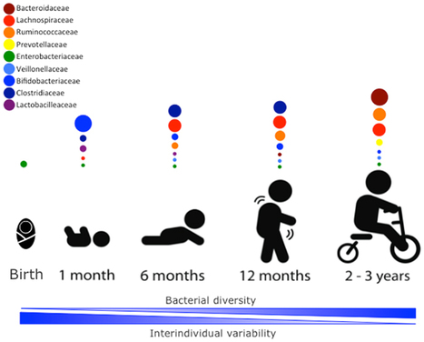 Frontiers | The Intestinal Microbiome in Early Life: Health and Disease | Immunotherapies and Vaccines | Systems biology and bioinformatics | Scoop.it