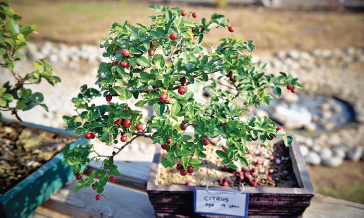 Over 150 exhibits featured at  bonsai show   Container Gardening   Scoop.it
