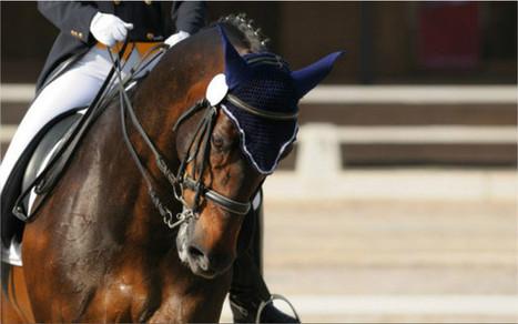 Caen DOCUMENT. Jeux équestres mondiaux de Normandie. Quel bilan financier ?   JEM 2014 Normandie   Scoop.it