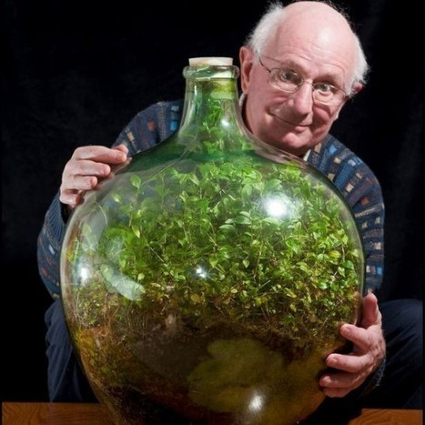 Thriving Bottle Garden Hasn't Been Watered in Over 40 Years | Strange days indeed... | Scoop.it