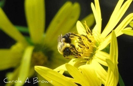 Bees Are Beautiful in the Wildlife Garden | Annie Haven | Haven Brand | Scoop.it
