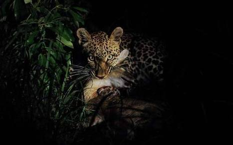 South Africa: On a wildlife photo safari in Sabi Sabi - Telegraph.co.uk | African Wildlife and Conservation Matters | Scoop.it