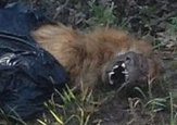 Mystery creature image posted on Twitter   Paranormal Events   Scoop.it