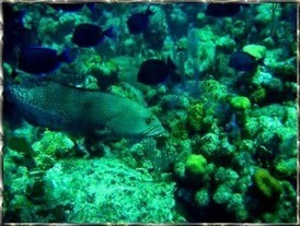 Roatan Snorkeling | Roatan Honduras Excursions | Scoop.it