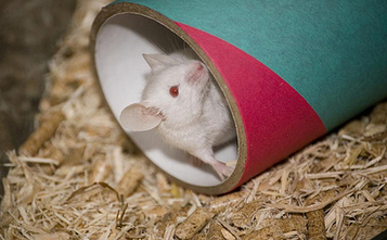 Animal Experiments Increase In Labs | ethics in animal experiments | Scoop.it