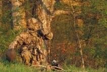 Turkey Hunting in New York | Turkey Hunting Nation | Realtree ® | Hunting 003 | Scoop.it