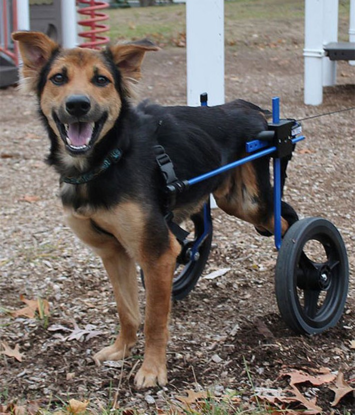 The Heartwarming Story Of Leo, A Paralyzed Puppy Found On A Beach In Thailand | Walking On Sunshine | Scoop.it