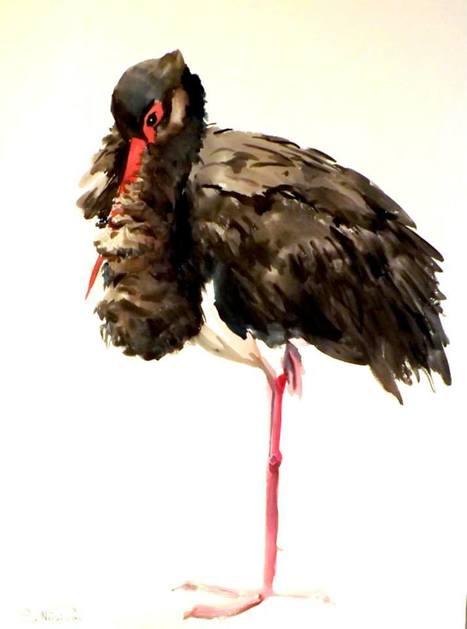 500.000 aves eligen España cada otoño como parte de su ruta migratoria - EcoDiario.es | Casa NIDO - HOUSE NEST | Scoop.it