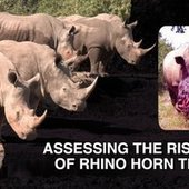 Safarious Video - The Risks of Legal Trade in Rhino Horn | Rhino | Scoop.it