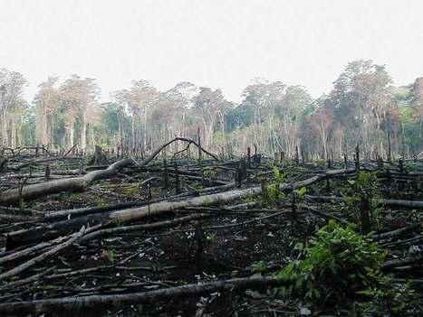 Comment le bois volé au Cameroun est distribué sur les marchés internationaux | Afrique: développement durable et environnement | Scoop.it