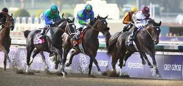 Ocala, Marion County horses shine at Breeders' Cup | Horse Racing News | Scoop.it