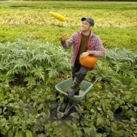 Agriculture bio et agroécologie | Nourrir la planète... autrement | Scoop.it