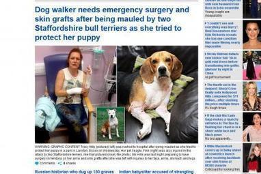 Une femme grièvement blessée pour avoir tenté de défendre son beagle attaqué par deux molosses.   Beagle   Scoop.it