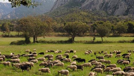 L'assemblée de Corse votera-t-elle : Non au déclassement des sites remarquables et des terres agricoles ? | Ambiante | Scoop.it