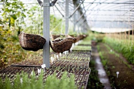 Les miracles de la permaculture | agriculture en ville | Scoop.it