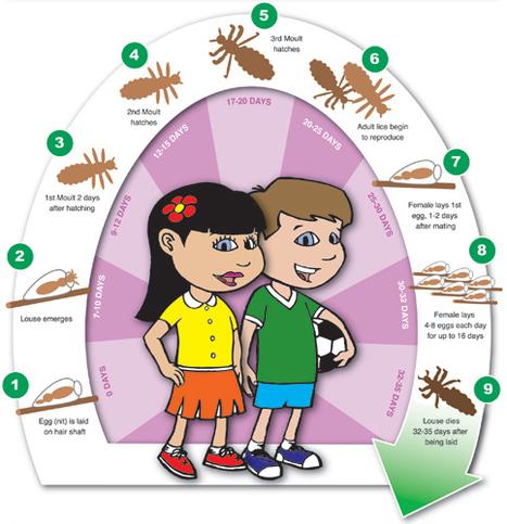 CDC: Head lice | Everyday School Health | Scoop.it