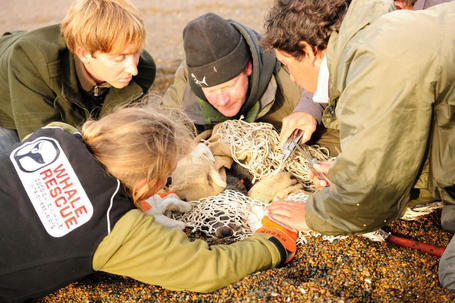 Team effort to rescue fur seal - Northern Advocate | whale news | Scoop.it
