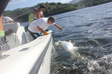 18-Year-Old Lands Record-Breaking Tarpon in Trinidad | GoFISHn | Boat News | Scoop.it
