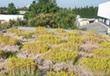 Conception des toitures végétalisées : quelques points clés techniques et règlementaires | HORTICULTURE BOTANIQUE | Scoop.it