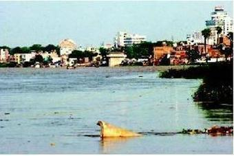 Ganga water has heavy metal, pesticide traces: CPCB - Times of India | Nature to Share | Scoop.it