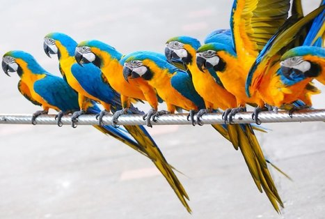 14 Fun Facts About Parrots | All Things Zygodactyl | Scoop.it