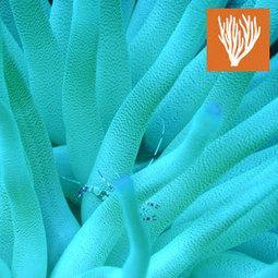 Marine Biology Camps | Marine biology | Scoop.it