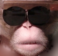 Shape-Shifting: Researchers Change How Monkeys See in 3-D: Scientific American | The brain and illusions | Scoop.it