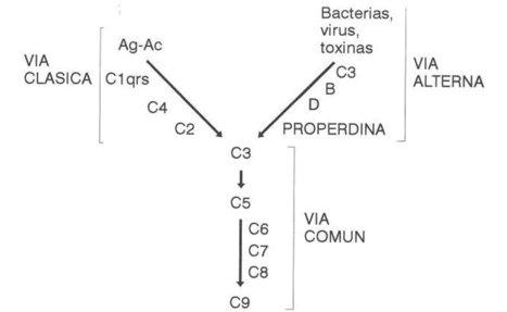 Mecanismos Inmunopatológicos | Mecanismos inmunopatologicos de daño celular. | Scoop.it