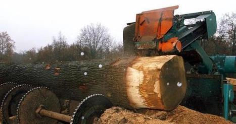 Les exploitants forestiers dans la tourmente | Approvisionnement et Première Transformation | Scoop.it