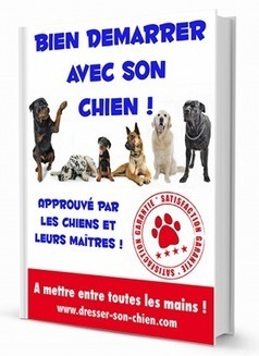 Dresser son chien : le blog | Dresser son chien | Scoop.it