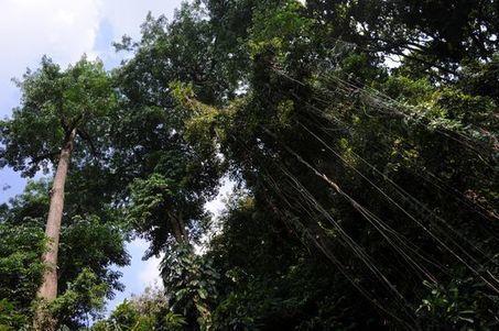 Déforestation: 18millions d'hectares de forêts perdus en2014 | Ca m'interpelle... | Scoop.it